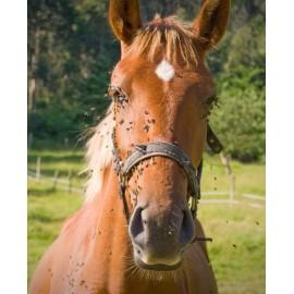 REACTY HORSE ELITE Répulsif anti-insectes pour la tranquilité des Chevaux